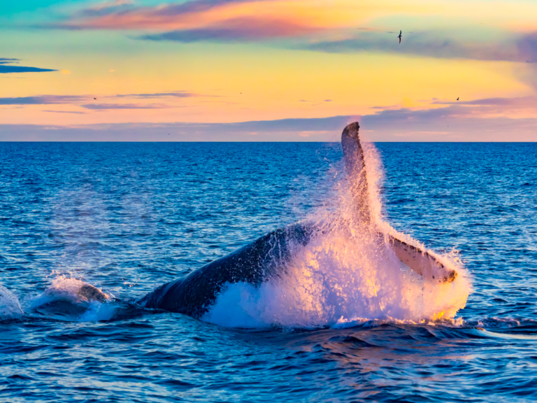 See a Breaching Whale on These Great Tours